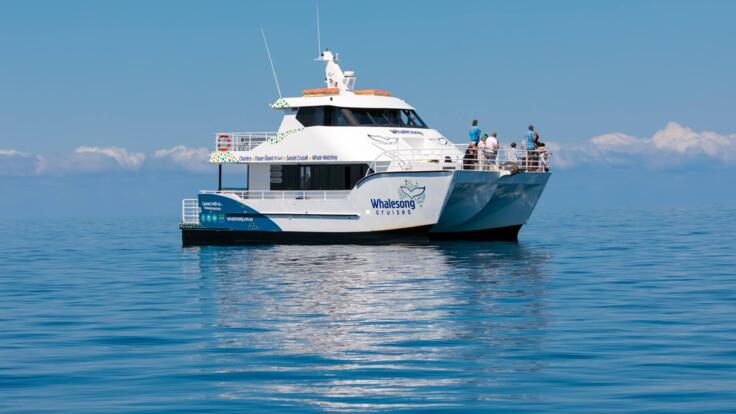 Whale Watching Tours Hervey Bay