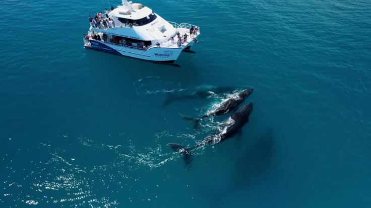 Whale watching - Hervey Bay - Fraser Island