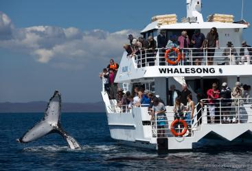 Large private vessel for exclusive whale watching charter | Hervey Bay