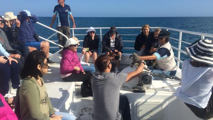 Listen to Whale talk on our Whale Watching Tour | Hervey Bay