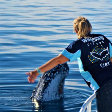 Whale Watching Private Charter from Hervey Bay