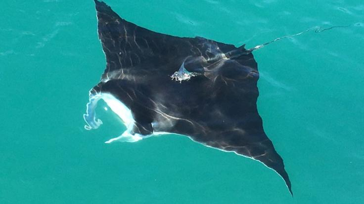 Mantaray | Whitehaven Beach Snorkel Tour