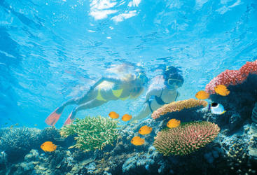 Snorkelling amongst colourful coral on the Great Barrier Reef