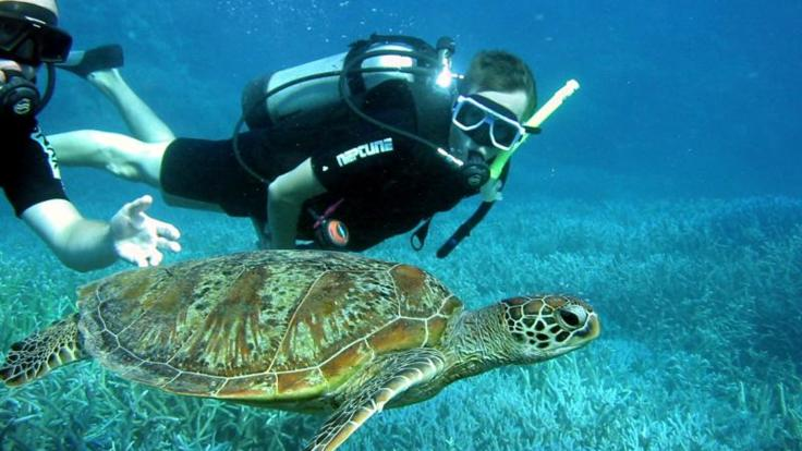 Scuba dive the Whitsunday Islands with turtles