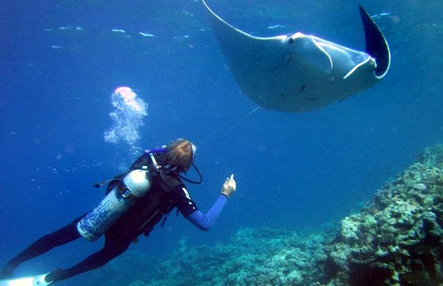 A scuba diver with a Mantaray in the Whitsundays on the Great Barrier Reef