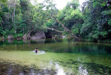 Dip in the crystal clear swimming hole in national park rainforest