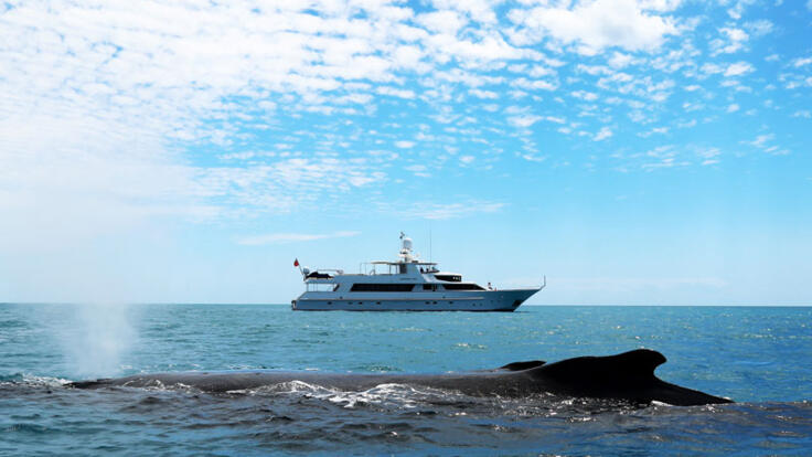 YOTSPACE superyacht voyages - Phoenix One - Great Barrier Reef - Humpback Whales