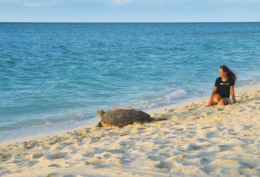 Turtle heading to the water, Heron Island