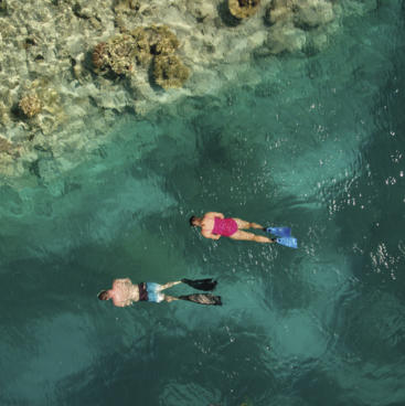 Snorkelling, Lady Musgrave Island