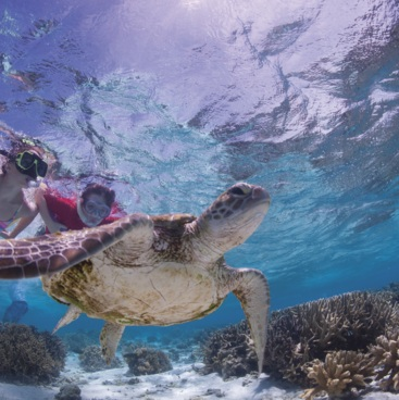 Swimming with turtles, Lady Elliot Island