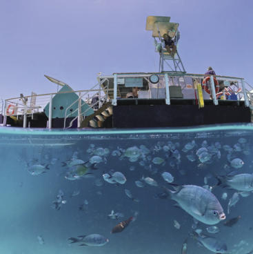 Fish at pontoon, Lady Musgrave Island