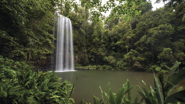 Millaa Millaa Falls, Tropical North Queensland