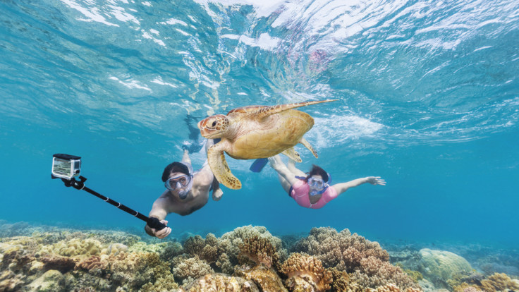 Swimming with turtles, Moore Reef Great Barrier Reef Cairns Australia