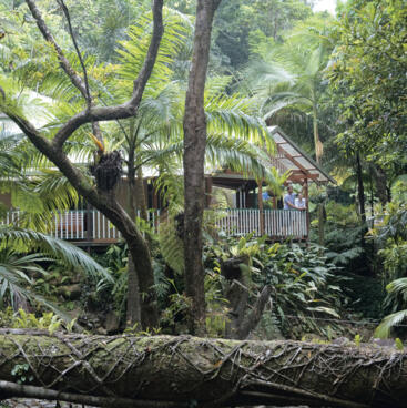 Rainforest accommodation, Mossman