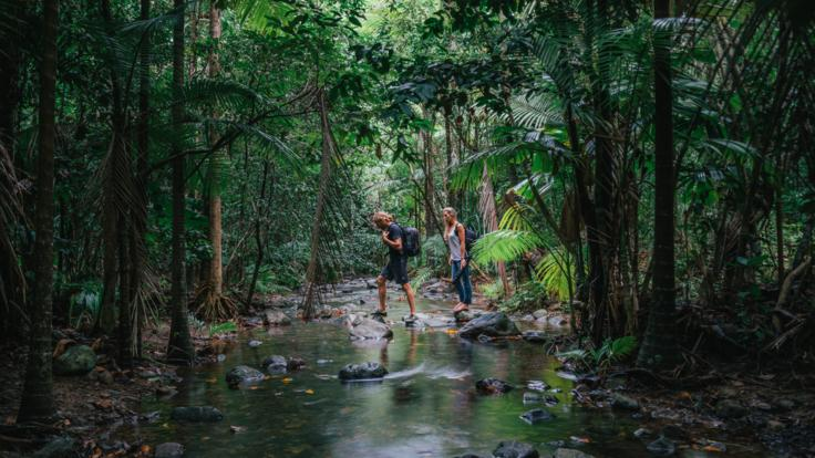 Hiking in the Daintree Rainforest, Far North Queensland