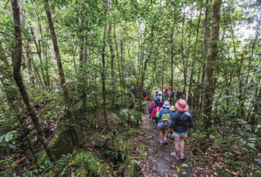 Cloudy Creek Walk, Paluma Range National Park