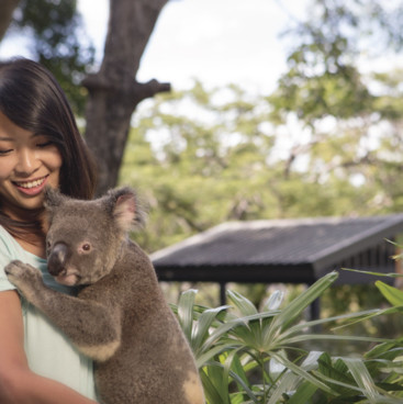 Cuddling a koala, Hamilton Island Resort, Whitsundays