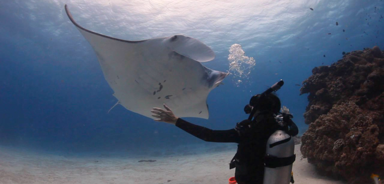 Diving with Manta Rays, Lady Elliot Island