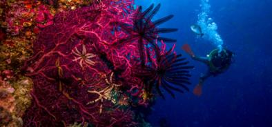 Barrier Reef Australia: Diver on the Great Barrier Reef in Australia
