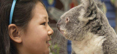 Barrier Reef Australia: Get up close and personal with a koala