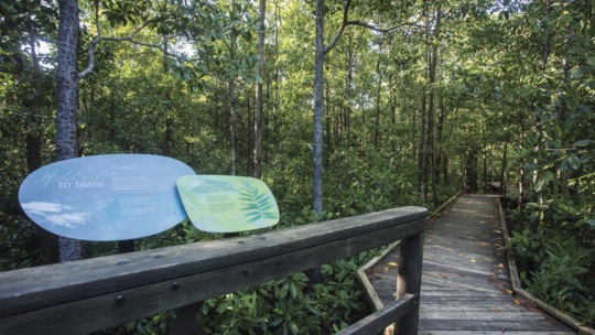 Diversity Trail, Cape Hillsborough National Park